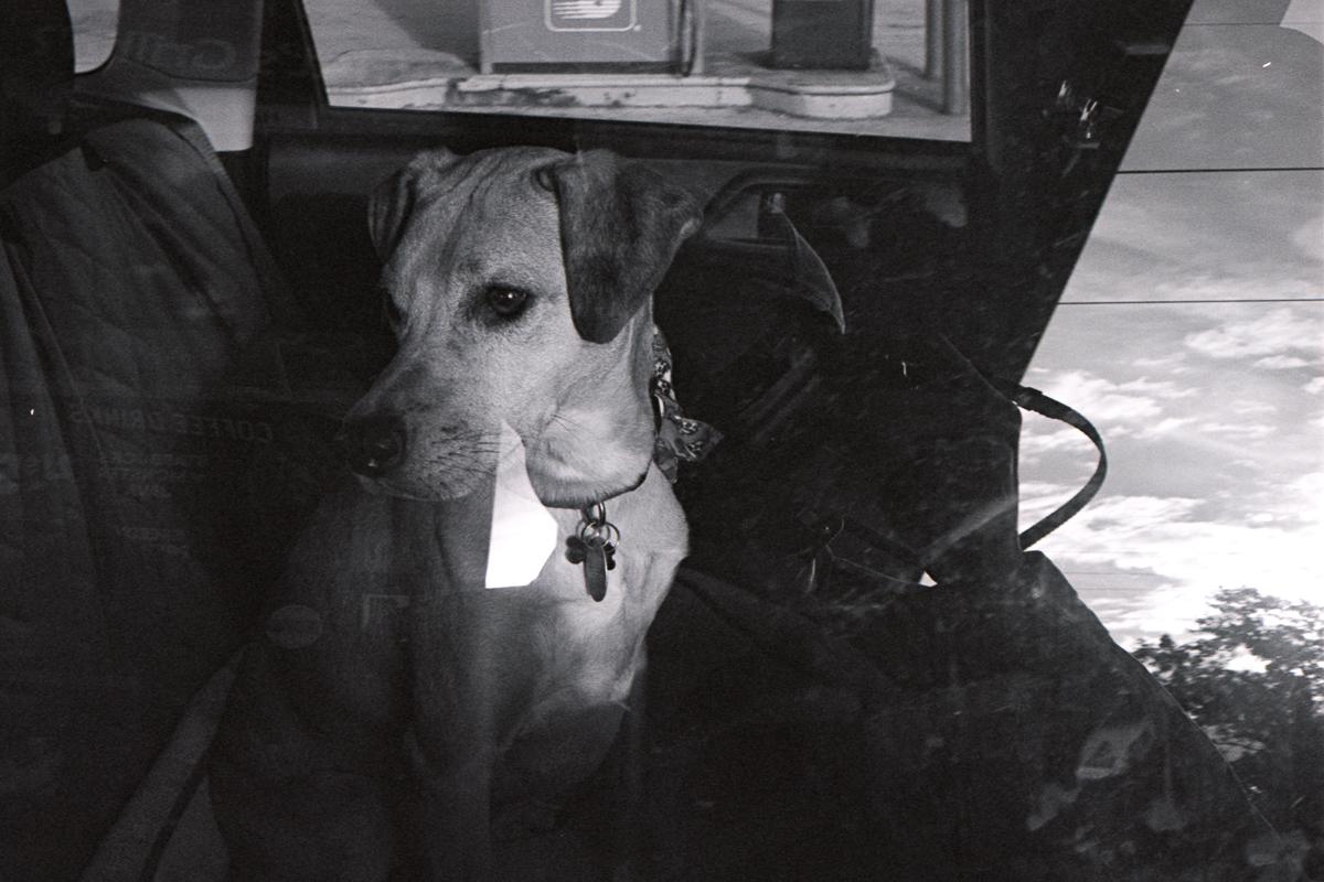 Black and white. Pup through a car window.