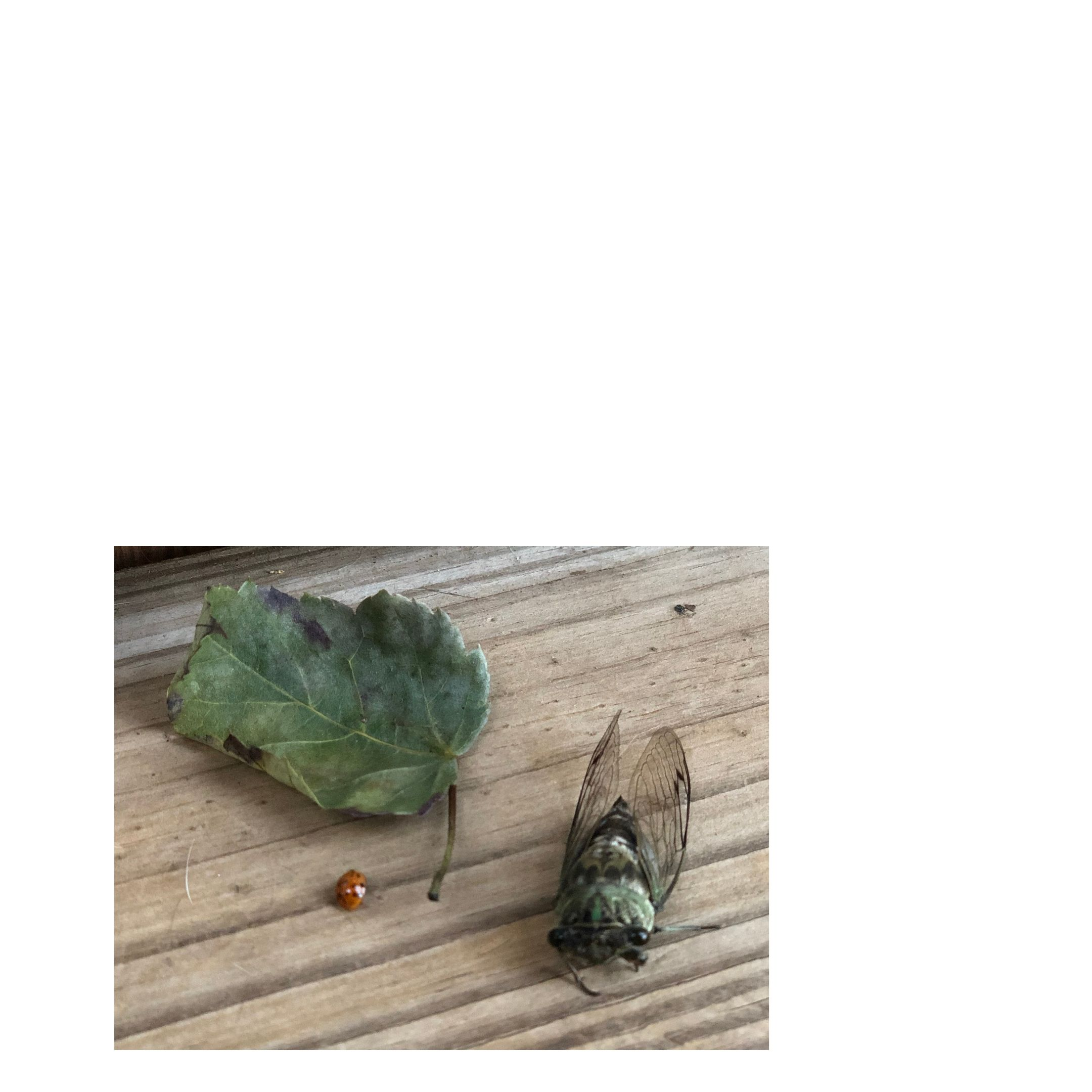 2 dead bugs and a leaf