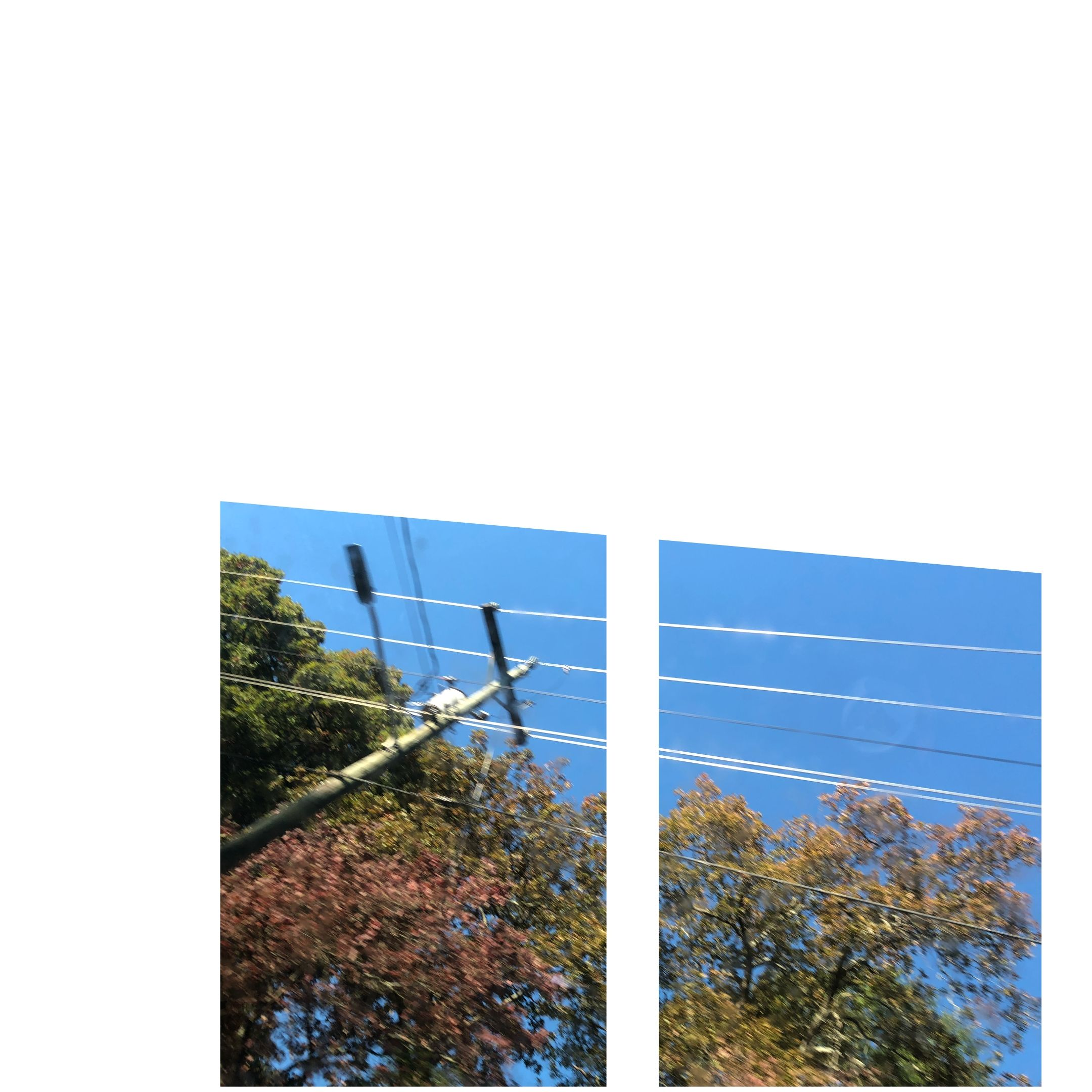 power lines and fall colors
