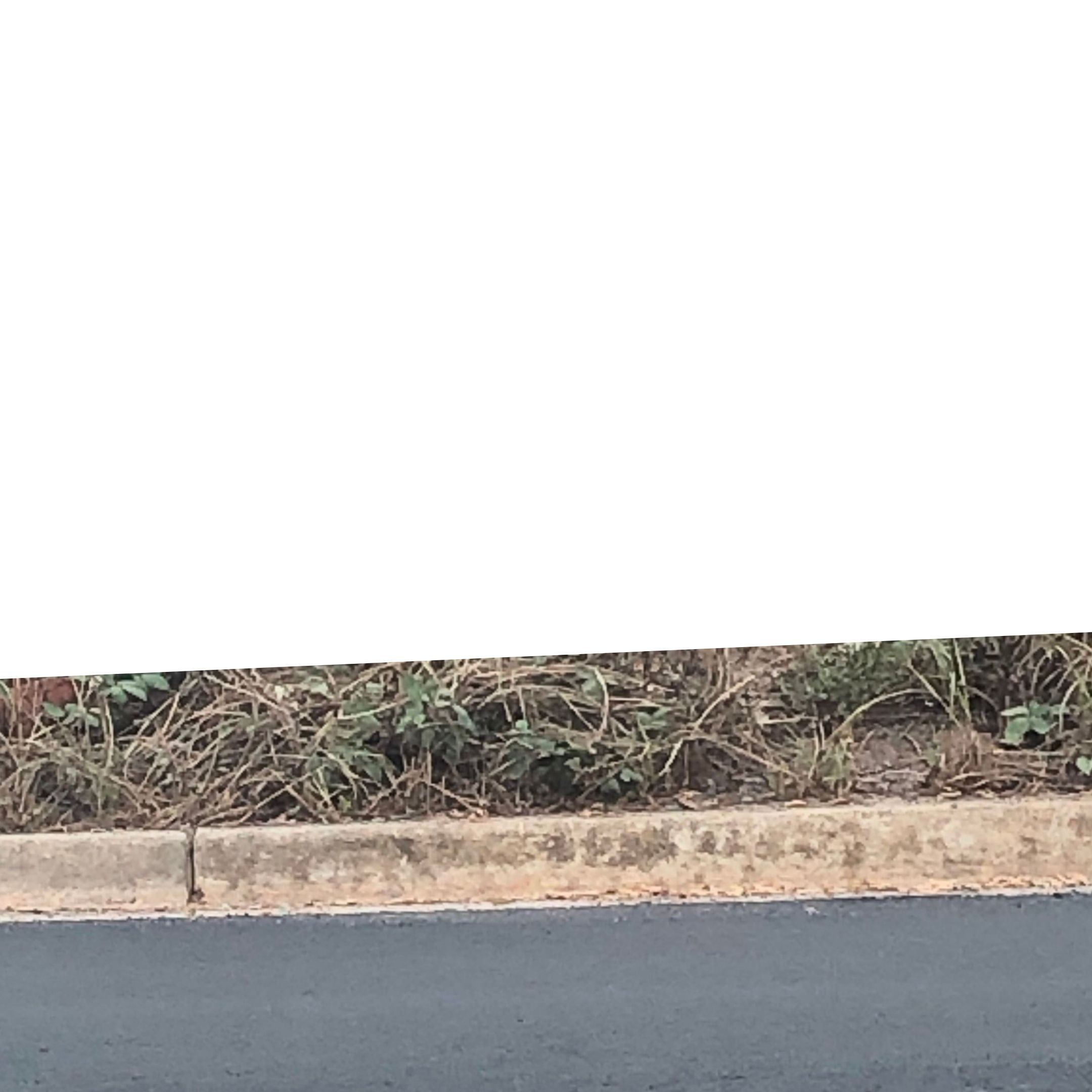 curb and weeds