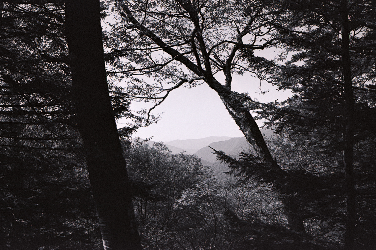 Black and white. Smokies through a clearing of trees.