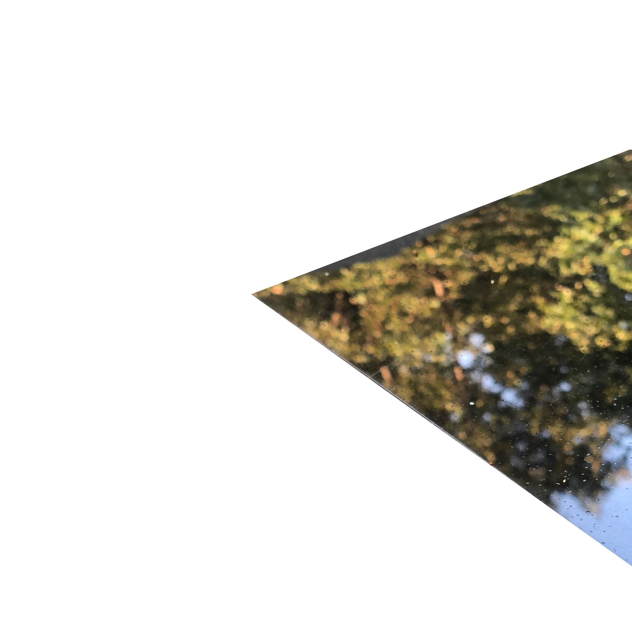 trees reflected in a sunroof