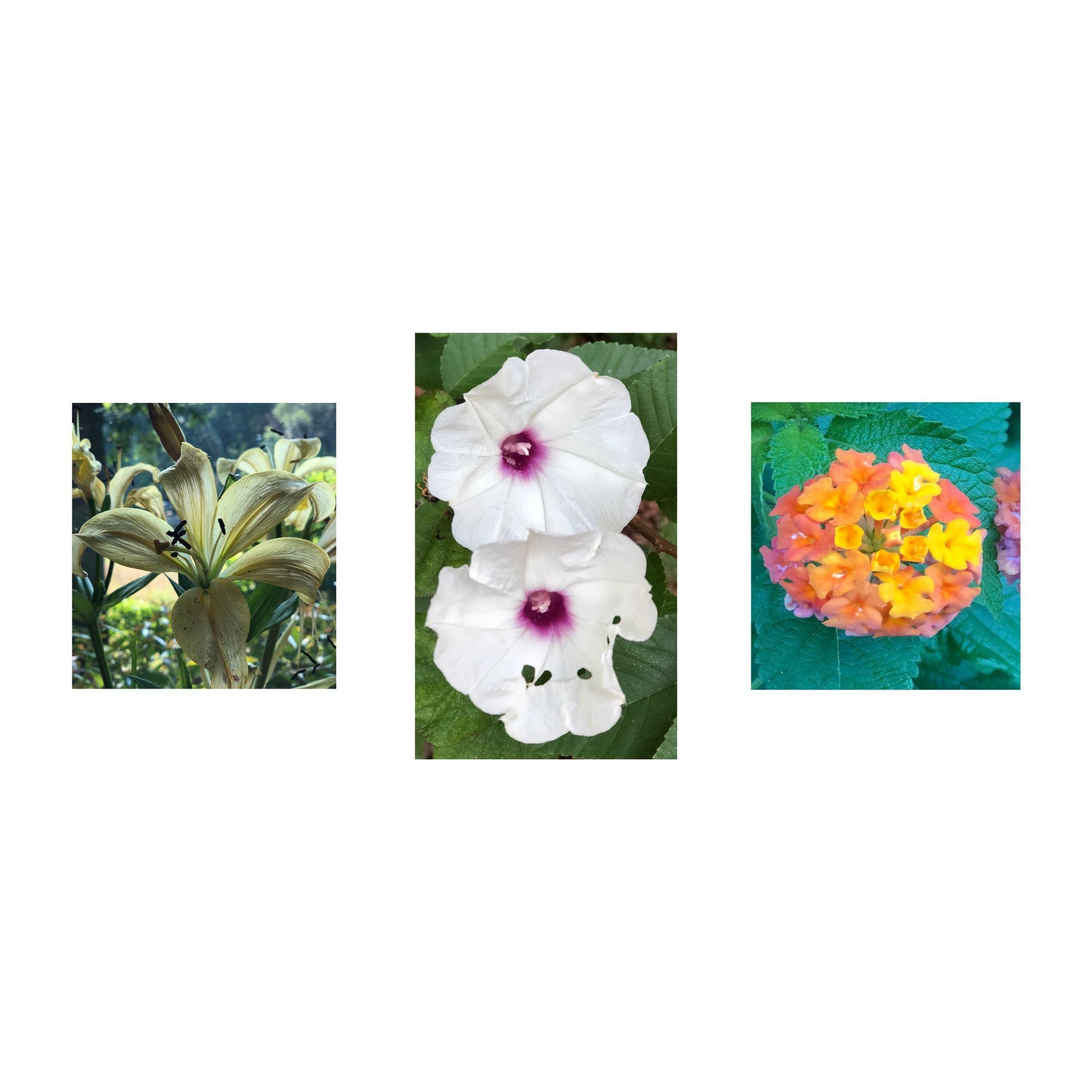 trio of flower shots