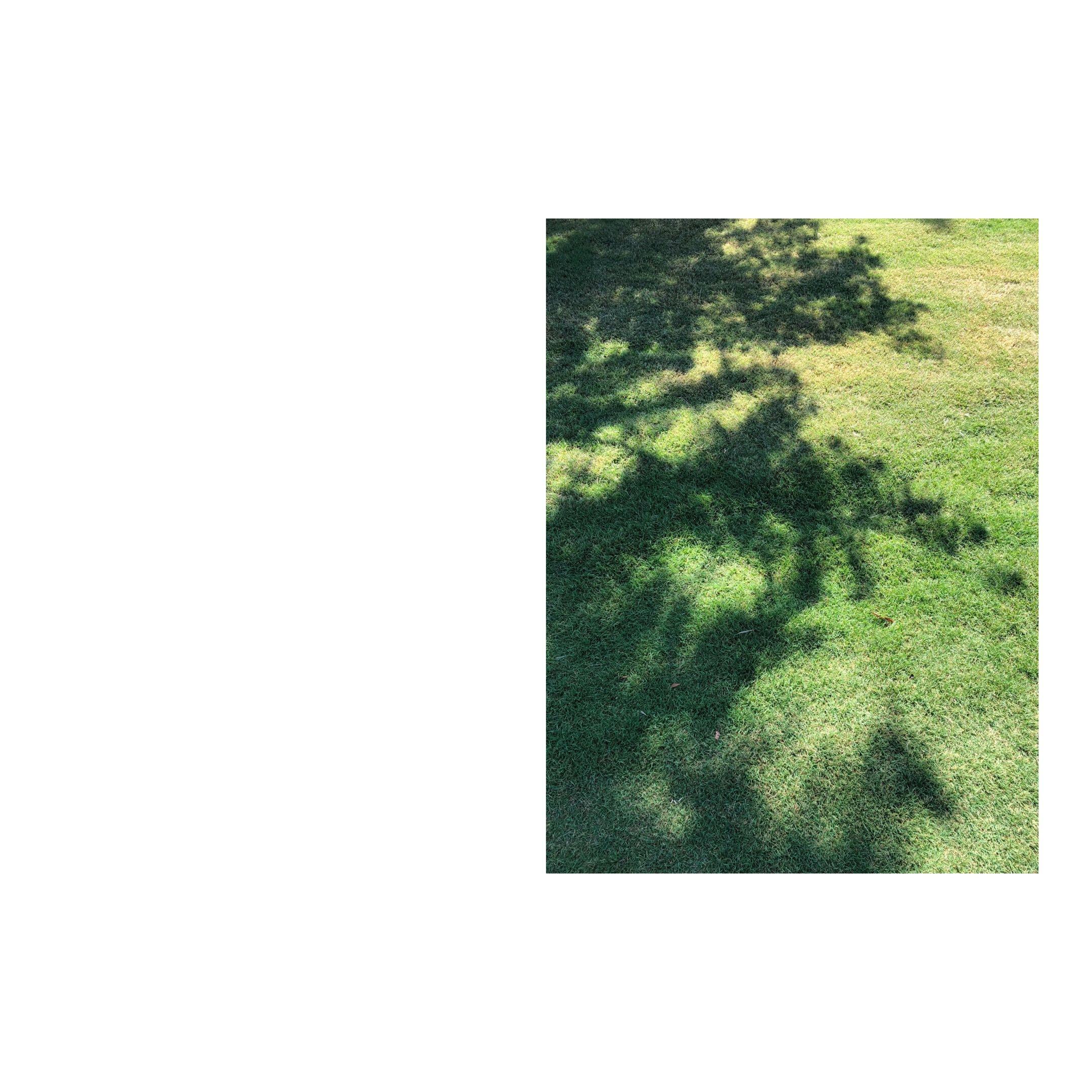 tree's shadow on grass