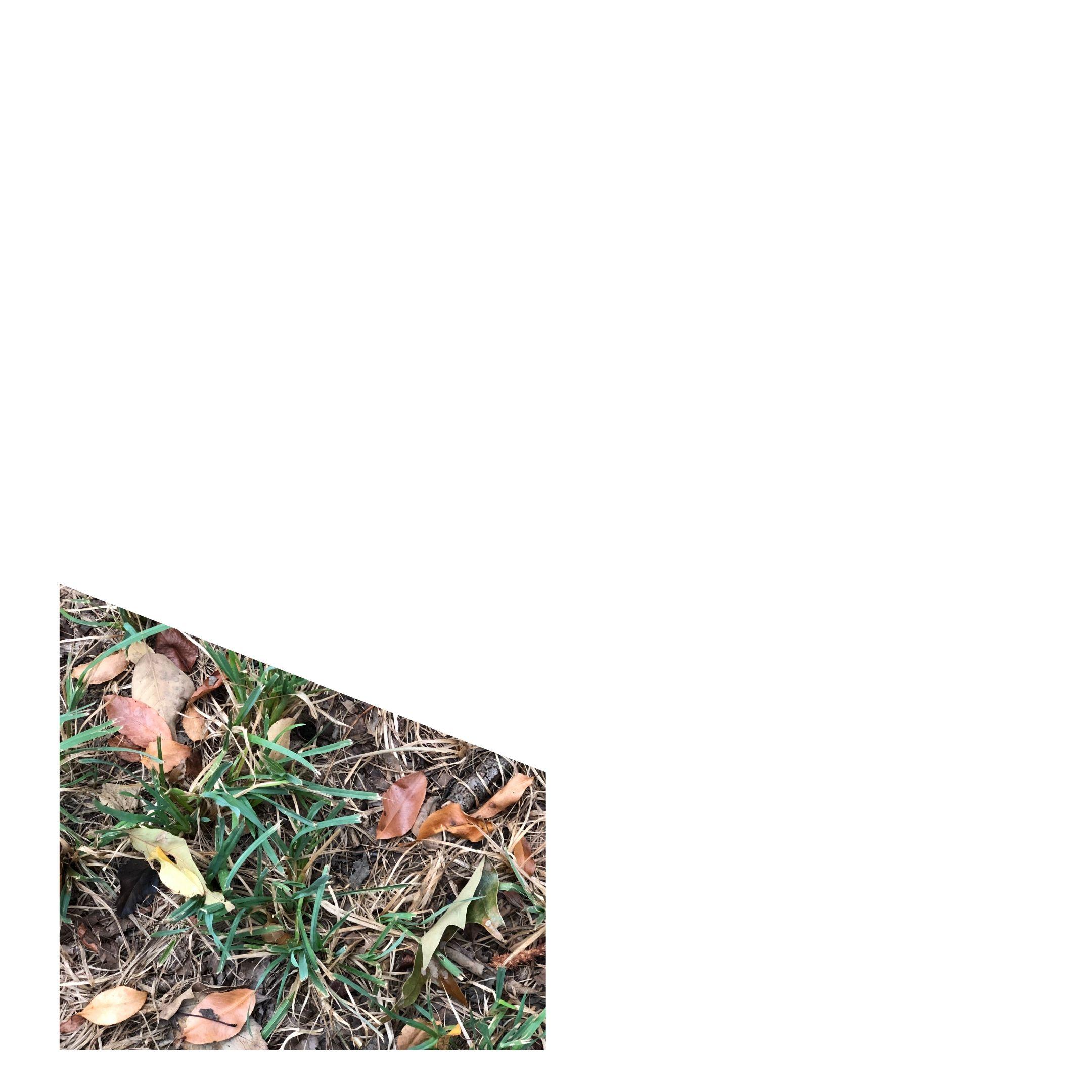 fallen leaves in spotty rye grass