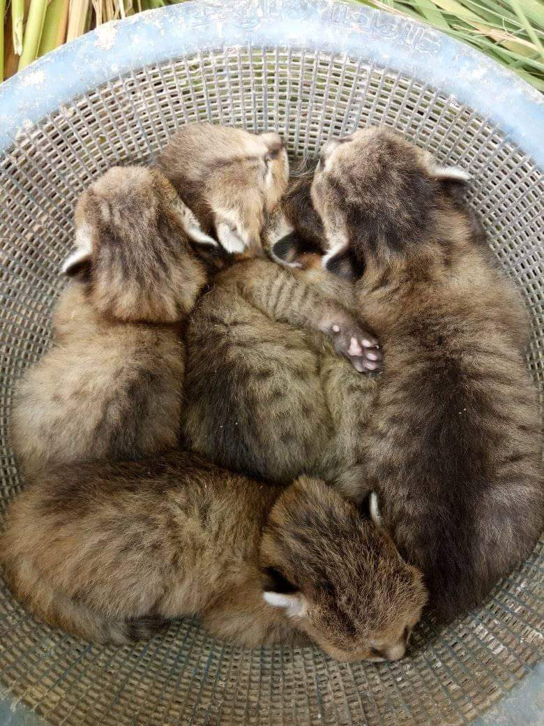 A basket full of baby civets cuddling each other