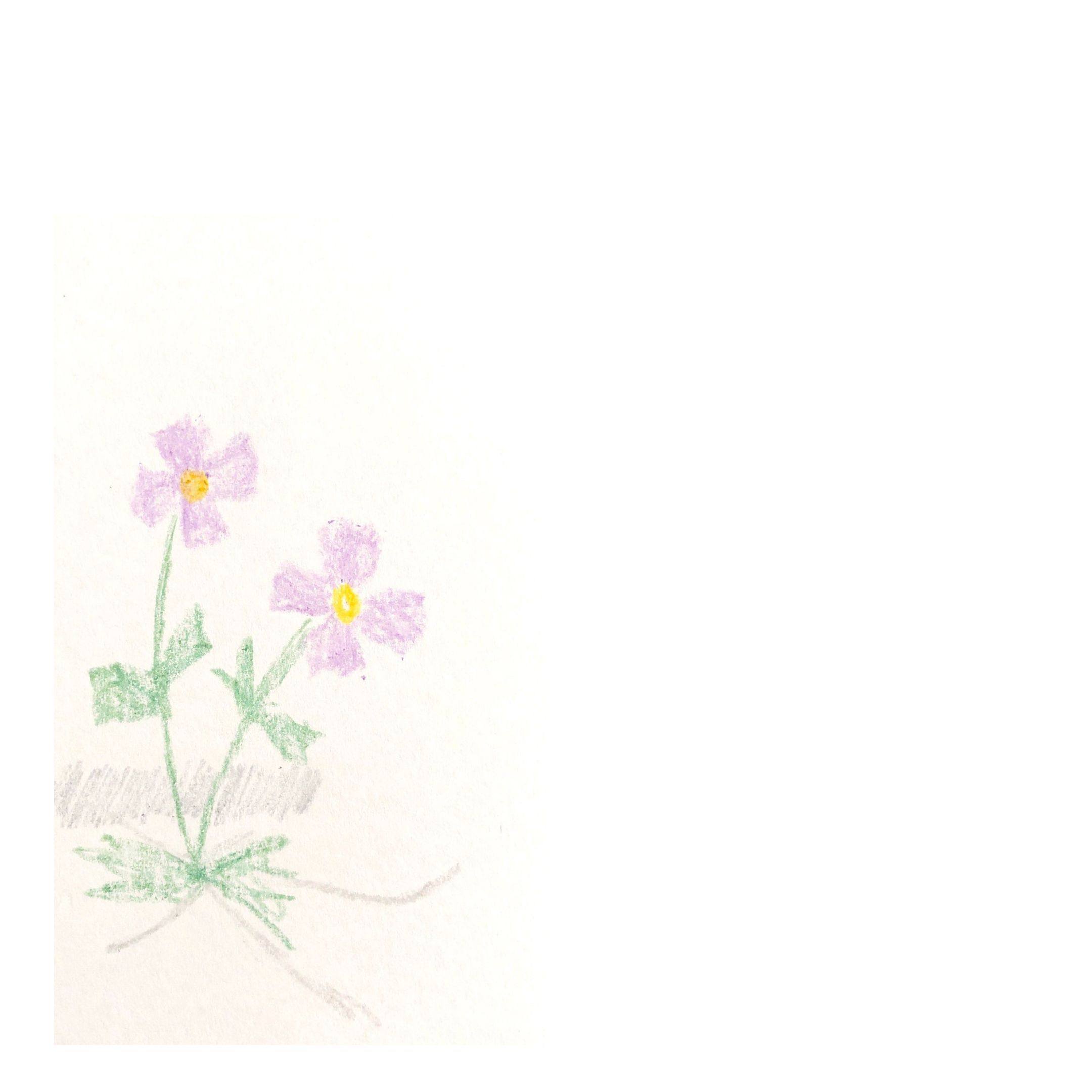 flower drawing in crayon