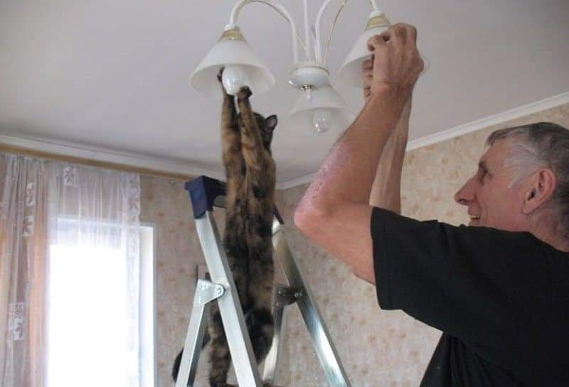 A cat on a ladder who has its paws on a lightbulb, while a man changes another lightbulb next to it