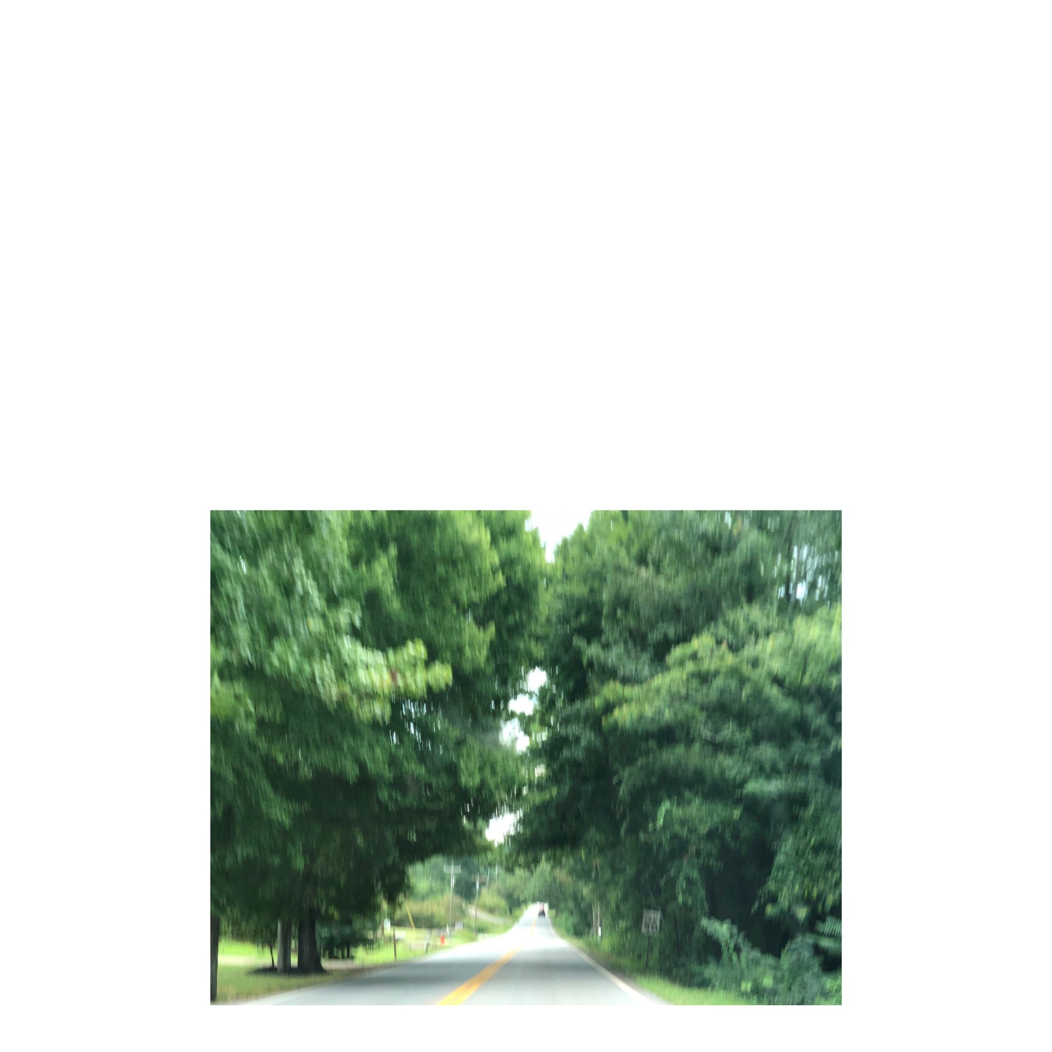 blurry shot of road through trees