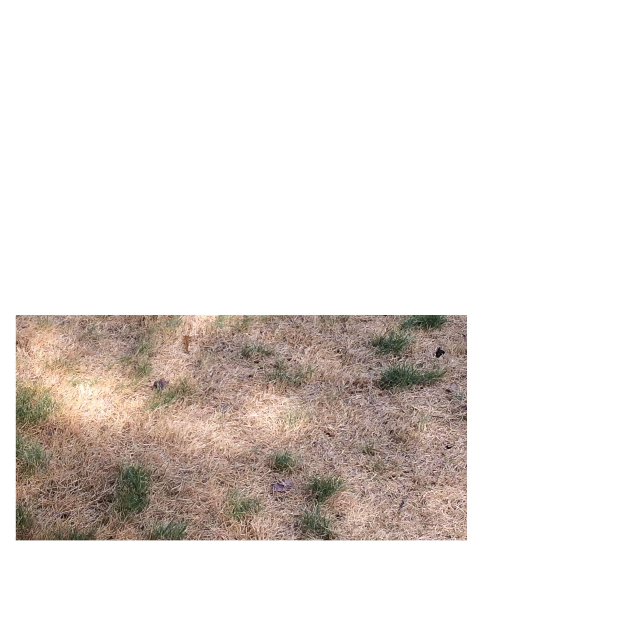 rather dead grass